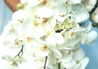 whiteorchids